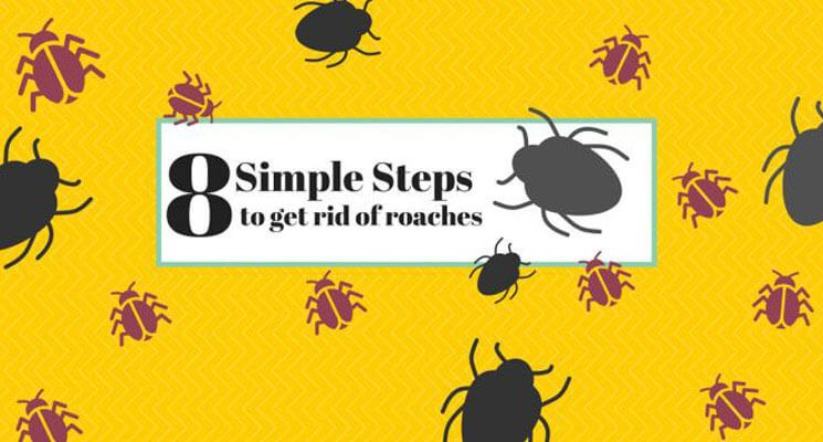 8 Simple Steps to Get Rid of Cockroaches - The Home Project ...