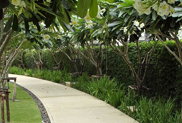 Landscaping Ideas For Your Dubai Garden